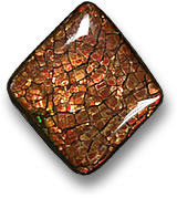 Reddish-Brown Ammolite Cabochon