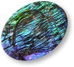 Multicolor ammolite gemstone