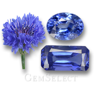 Cornflower and Blue Sapphire Gems