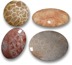 Indonesian Fossil Coral Gemstones