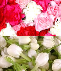 Carnations and White Jasmine