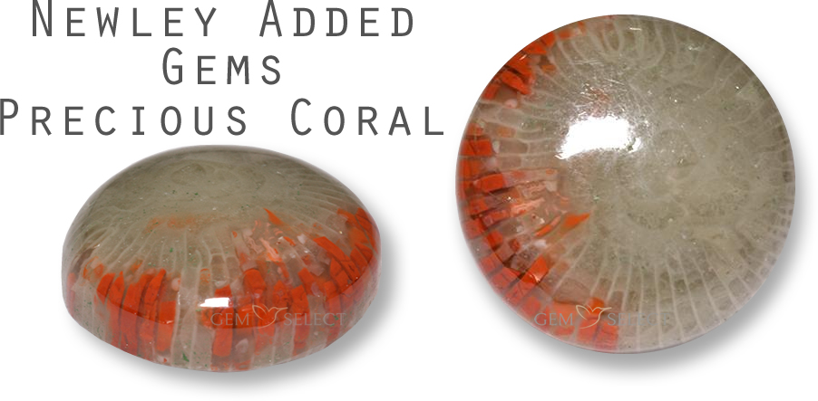 A Precious Coral Gemstone from GemSelect