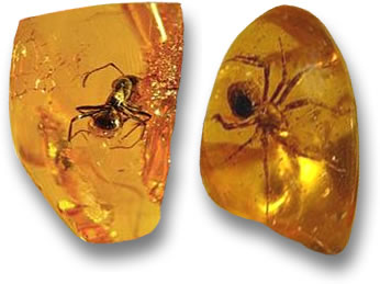 An Ant and a Spider frozen in time inside Baltic Amber