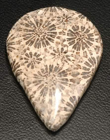 Natural Fossil Coral