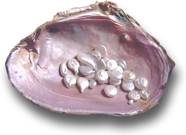 Pearl Shell From Tennessee