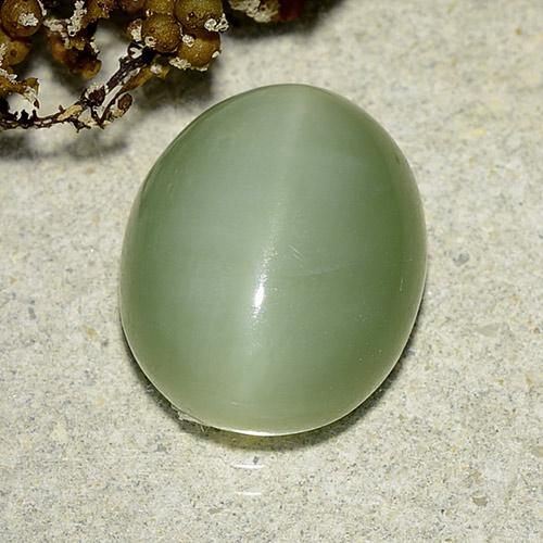 Green Actinolite Cat's Eye Gem - 6.2ct Oval Cabochon (ID: 485745)