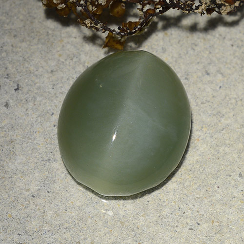 Green Actinolite Cat's Eye Gem - 7.3ct Oval Cabochon (ID: 486216)
