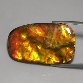Buy 24.17 ct Multicolor Ammolite 37.21 mm x 23.4 mm from GemSelect (Product ID: 273824)