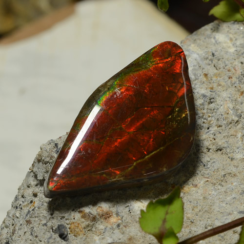 Multicolor Ammolite Gem - 17ct Fancy Cabochon (ID: 273827)