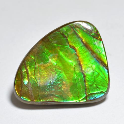 Multicolor Ammolite Gem - 7.3ct Shark Fin Cabochon (ID: 284772)