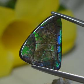 Multicolor Ammolite Gem - 8.5ct Shark Fin Cabochon (ID: 284773)
