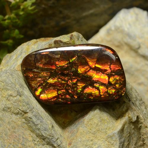 17.4ct Fancy Cabochon Multicolor Ammolite Gem (ID: 295150)