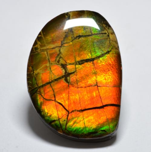 17.1ct Fancy Cabochon Multicolor Ammolite Gem (ID: 295296)