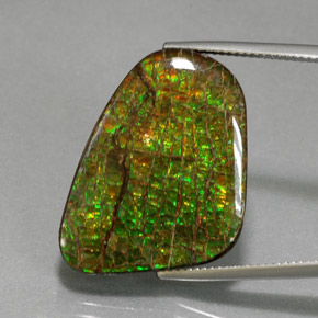21.3ct Fancy Cabochon Multicolor Ammolite Gem (ID: 375967)