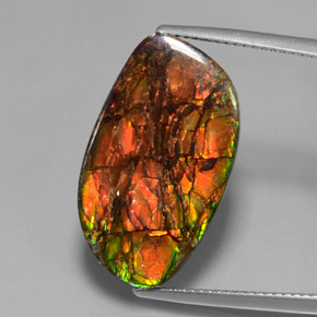 13.3ct Fancy Cabochon Multicolor Ammolite Gem (ID: 377437)
