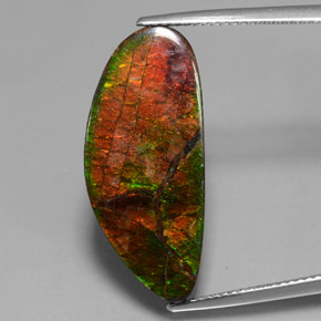 Multicolor Ammolite Gem - 12.1ct Fancy Cabochon (ID: 377438)