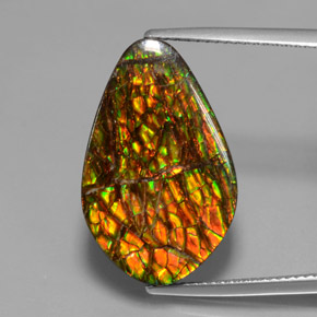 14.8ct Fancy Cabochon Multicolor Ammolite Gem (ID: 377442)
