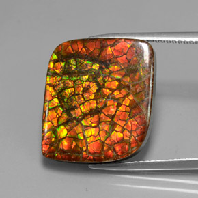 14.9ct Fancy Cabochon Multicolor Ammolite Gem (ID: 377444)