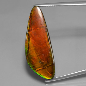 18.6ct Fancy Cabochon Multicolor Ammolite Gem (ID: 377459)