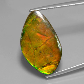 Multicolor Ammolite Gem - 15.4ct Fancy Cabochon (ID: 377464)