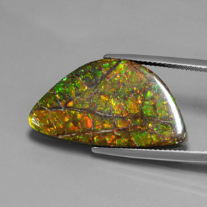 Multicolor Ammolite Gem - 17.7ct Fancy Cabochon (ID: 377466)