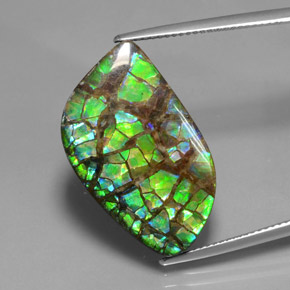 Multicolor Ammolite Gem - 17ct Fancy Cabochon (ID: 377467)
