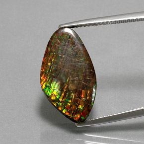 10.3ct Fancy Cabochon Multicolor Ammolite Gem (ID: 377509)
