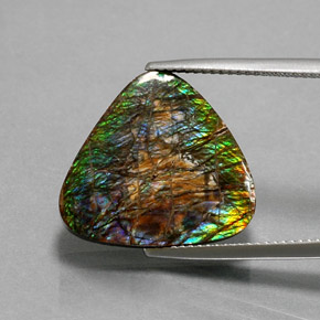 Multicolor Ammolite Gem - 12.3ct Trillion Cabochon (ID: 377517)