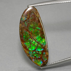 12ct Fancy Cabochon Multicolor Ammolite Gem (ID: 377628)