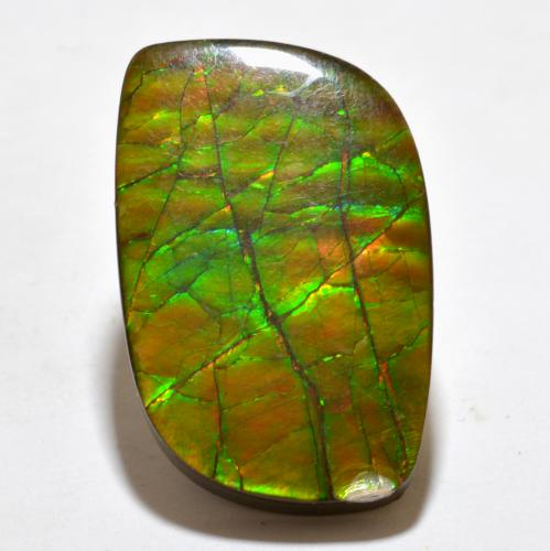 Multicolor Ammolite Gem - 19.3ct Fancy Cabochon (ID: 377634)