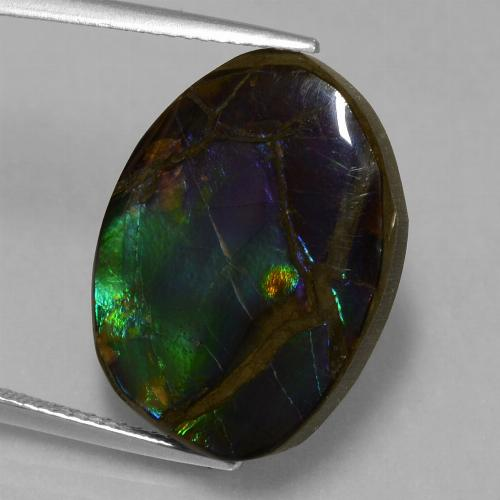 Multicolor Ammolite Gem - 13.6ct Fancy Cabochon (ID: 451515)