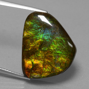 15.6ct Fancy Cabochon Multicolor Ammolite Gem (ID: 451517)