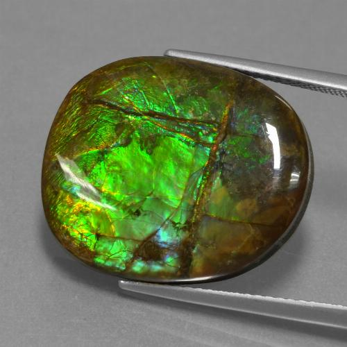 16.3ct Fancy Cabochon Multicolor Ammolite Gem (ID: 451518)