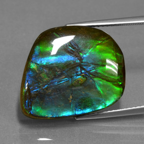 Multicolor Ammolite Gem - 15.3ct Fancy Cabochon (ID: 451521)
