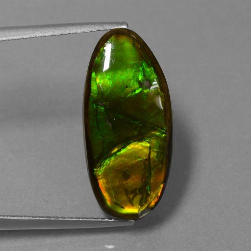 10.9ct Fancy Cabochon Multicolor Ammolite Gem (ID: 451527)