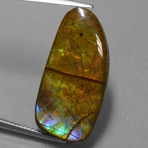 13.9ct Fancy Cabochon Multicolor Ammolite Gem (ID: 451529)