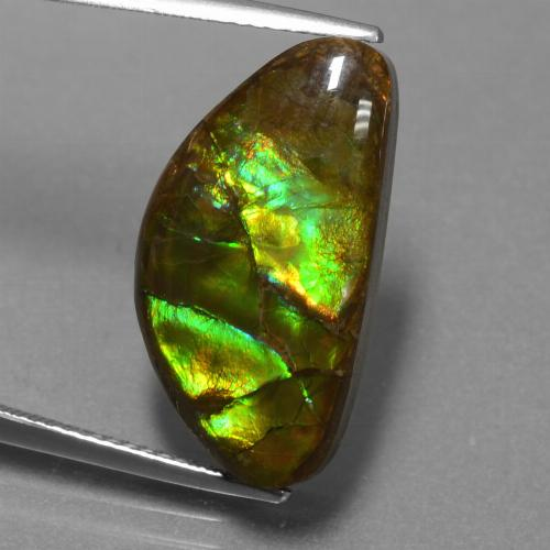 11.3ct Fancy Cabochon Multicolor Ammolite Gem (ID: 451530)