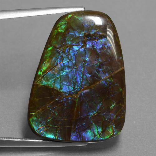 Multicolor Ammolite Gem - 24ct Fancy Cabochon (ID: 451531)