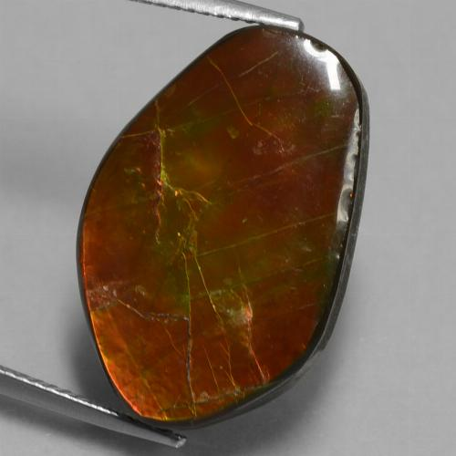 14.6ct Fancy Cabochon Multicolor Ammolite Gem (ID: 451532)