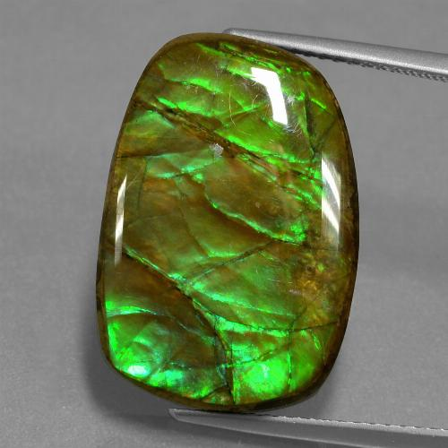 13.9ct Fancy Cabochon Multicolor Ammolite Gem (ID: 451535)