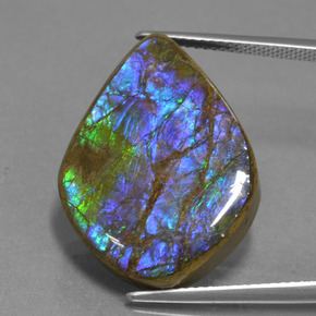 Multicolor Ammolite Gem - 18.1ct Fancy Cabochon (ID: 451536)