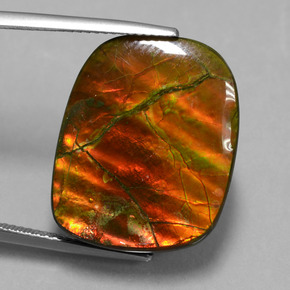20.3ct Fancy Cabochon Multicolor Ammolite Gem (ID: 451547)