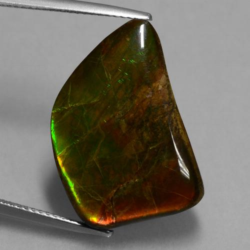 Multicolor Ammolite Gem - 15.6ct Fancy Cabochon (ID: 451552)