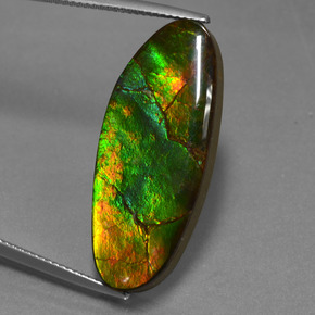 Multicolor Ammolite Gem - 17.8ct Fancy Cabochon (ID: 451620)