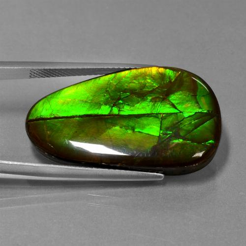 Multicolor Ammolite Gem - 21.6ct Fancy Cabochon (ID: 451648)
