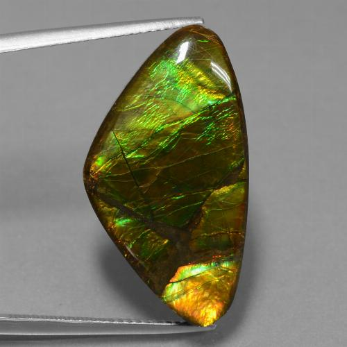 18.8ct Fancy Cabochon Multicolor Ammolite Gem (ID: 451694)