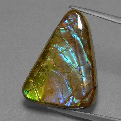 Multicolor Ammolite Gem - 13.2ct Trillion Cabochon (ID: 452643)