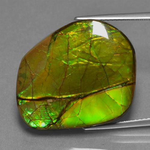 Multicolor Ammolite Gem - 21.3ct Fancy Cabochon (ID: 452652)