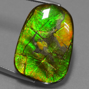 Multicolor Ammolite Gem - 24.2ct Fancy Cabochon (ID: 452680)
