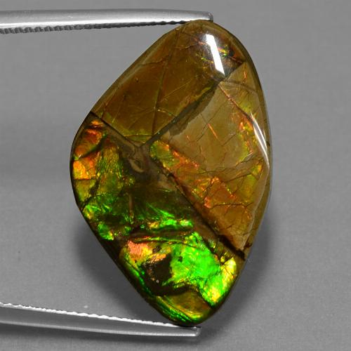 Multicolor Ammolite Gem - 19ct Fancy Cabochon (ID: 452684)